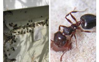 Les fourmis vivent en isolation