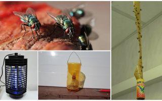 Comment traiter les mouches dans le pays