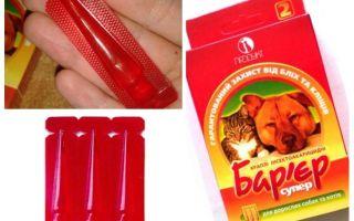Barrière anti-puces chez les chats et les chiens