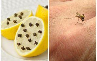 Citron avec gousses de moustique pour enfants et adultes