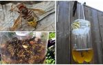 Pièges faits maison pour les frelons et les guêpes