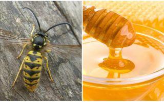 Les guêpes font du miel ou pas