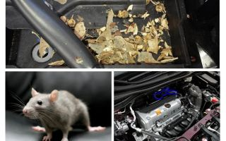 Comment faire sortir les souris de la voiture