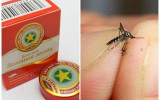 Moustique étoile balsamique