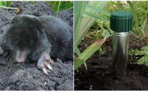 Comment se débarrasser des taupes dans le chalet et le jardin