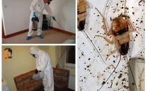 Extermination de cafards dans l'appartement