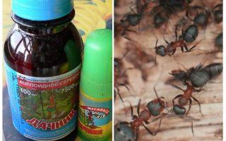 Signifie le résident d'été des fourmis