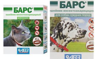 Collier Léopard de puces pour chiens et chats