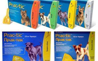 Drops Practices des puces et des tiques pour les chiens
