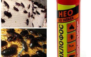 Le dichlorvos des cafards aide-t-il à empoisonner