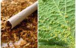 Tabac contre les pucerons
