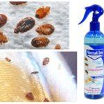 Pulvériser des insectes domestiques