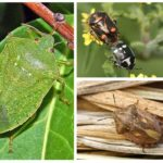 Insectes nuisibles