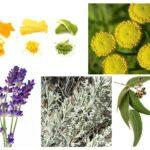 Remèdes populaires contre les mites de nourriture