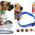 Collier anti-puces pour chiens
