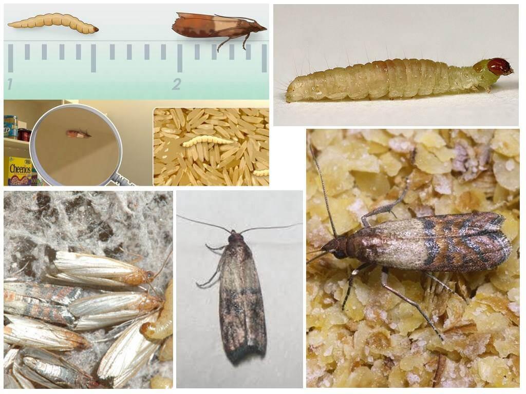 Comment Traiter Les Mites Dans Les Armoires qu'est-ce qui mange le papillon de nuit: vêtements