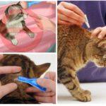 Règles de traitement des animaux