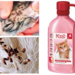 Shampoing aux puces pour chatons