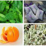 Remèdes populaires pour la teigne