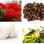 Remèdes populaires pour les moucherons