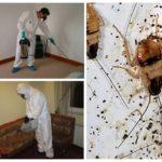 Traitement des blattes