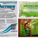 Remèdes d'aleurodes