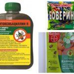 Remèdes contre les scolytes