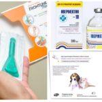 Remèdes contre les puces et le hamster