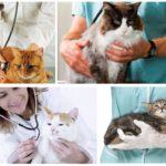 Voyage chez le vétérinaire