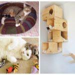 Traitement de la litière aux puces et chats