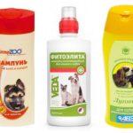 Shampoing aux puces chez le chien