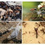 Civilisation de fourmis