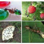 Nourriture pour les fourmis