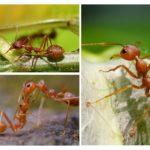 Fonctions des membres d'insectes