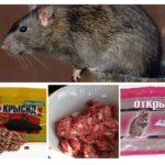 Produits chimiques de rat