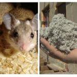 Ecowool et les souris