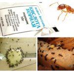Extermination de fourmis à la maison