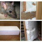Rats et mousse