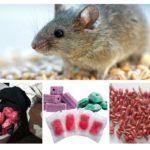Formes de poison à rat