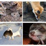 Animaux qui mangent des souris