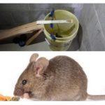 Piège à souris seau