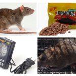 Méthodes de traitement avec les rats