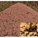 L'apparition de la fourmilière