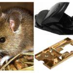 Piège à souris