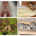 Habitat de la souris
