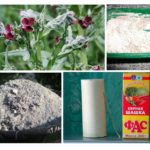 Remèdes populaires pour les souris