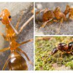 L'apparition de la fourmi