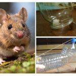 Attraper des souris sans piège à souris