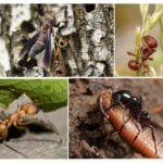 Nourriture pour insectes dans la nature