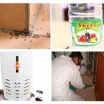 Façons de tuer les insectes